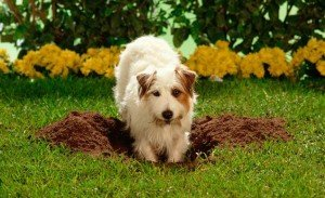 Burying my pets ashes in the garden